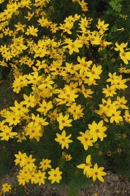 Expozice rostlin Severní Ameriky vznikala u nás postupně. Na podzim ...